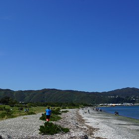 Kupe Landing: Petone Beach Clean-up